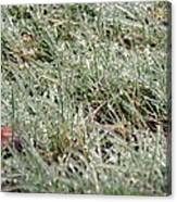 Frosted Grass Canvas Print