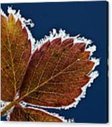 Frosted Leaf Canvas Print