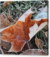 Frosted Leafs Canvas Print