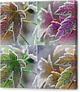 Frosted Maple Leaves In Warm Shades Canvas Print