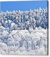 Frosted Mountainside Canvas Print