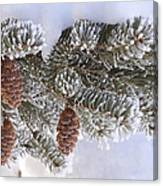 Frosted Pine Tree And Cones 1 Canvas Print