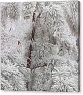 Frosted Pines Canvas Print