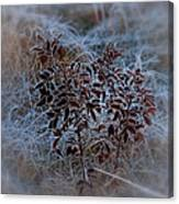 Frosted Rugosa Canvas Print