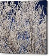Frosted Wires Canvas Print