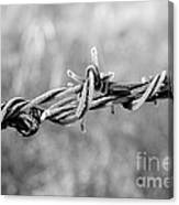 Frosty Barb Wire Canvas Print