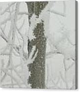 Frosty Branches Canvas Print