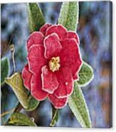 Frosty Camellia - Phone Case Design Canvas Print