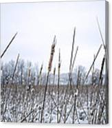 Frosty Cattails Canvas Print