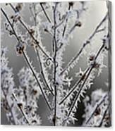 Frosty Field Plant Canvas Print