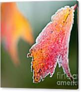 Frosty Leaf Canvas Print