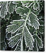 Frosty Leaves Macro Canvas Print