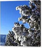 Frosty Limbs Canvas Print