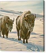 Frosty Morning - Buffalo Canvas Print