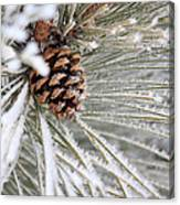Frosty Norway Pine Canvas Print