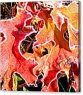 Frosty Oak Leaves Canvas Print