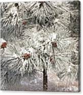 Frosty Pinetree Canvas Print
