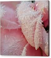 Frosty Rose Canvas Print