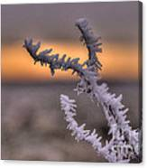 Frosty The Twig  Canvas Print