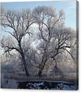 Frosty Trees 4 Canvas Print