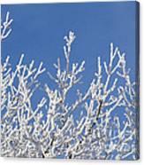 Frosty Winter Wonderland 01 Canvas Print