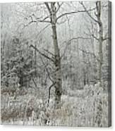 Frosty Wonderland Canvas Print