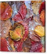 Frozen Autumn Aspen Leaves Canvas Print