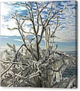 Frozen Backlight Canvas Print