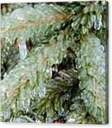 Frozen Boughs Canvas Print