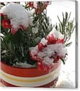 Frozen Christmas Flowers Canvas Print