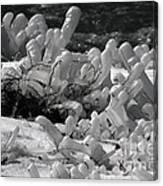 Frozen Falls Tundra Fingers Canvas Print