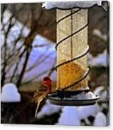 Frozen Feeder And Disappointment Canvas Print