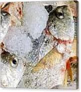 Frozen Fish On Ice Canvas Print