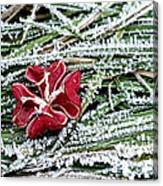 Frozen Flower Canvas Print