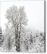 Frozen Giant Canvas Print