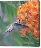 Frozen Hummingbird Canvas Print