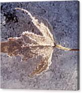 Frozen Leaf Canvas Print