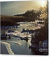 Frozen Marsh Canvas Print
