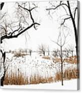 Frozen Marshland IIi Canvas Print