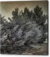 Frozen November Day Canvas Print