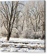 Frozen Swamp Canvas Print