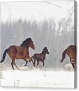 Frozen Track Canvas Print