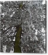 Frozen Tree 2 Canvas Print