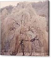 Frozen Willow Canvas Print