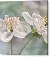 Fruit Blossoms Canvas Print