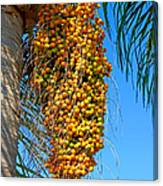 Fruit Of The Queen Palm Canvas Print