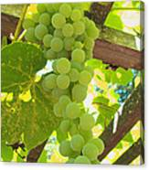 Fruit Of The Vine - Garden Art For The Kitchen Canvas Print