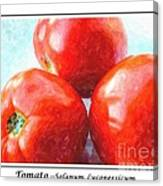 Fruit Of The Vine - Tomato - Vegetable Canvas Print