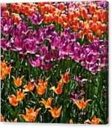Fruity Tulips Canvas Print