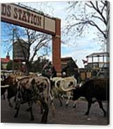 Ft Worth Trail Ride At Ft Worth Stockyard Canvas Print